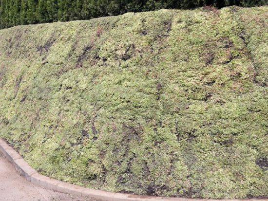 boeschungsbepflanzung-mit-vegetationsmatten